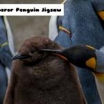 Emperor Penguin Jigsaw