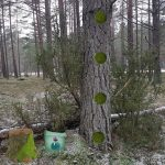 Return To The Frozen Forest
