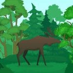 Wild Animals Coloring